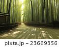 竹林の道 竹林 新緑の写真 23669356