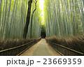 竹林の道 竹林 新緑の写真 23669359