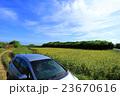 沖縄 ひまわり畑へドライブ 宮古島 伊良部島 23670616