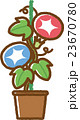 朝顔 鉢植え 花のイラスト 23670780