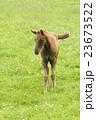 子馬 23673522