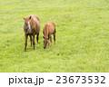 馬の親子 23673532