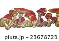 キノコ 23678723
