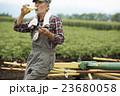 農家 昼食 23680058
