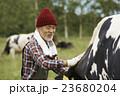 畜産 仕事風景 23680204
