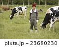 畜産 仕事風景 23680230