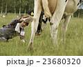 畜産 仕事風景 23680320
