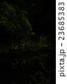 蛍 乱舞 光の写真 23685383