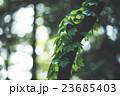 つる 木 23685403