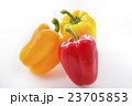 パプリカ 夏野菜 野菜の写真 23705853
