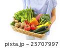 採れたての野菜 23707997