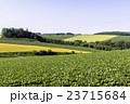 畑 田園風景 農業の写真 23715684