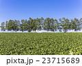 畑 農業 丘の写真 23715689