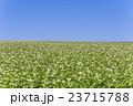 じゃがいも畑 畑 農業の写真 23715788