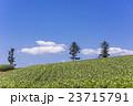 じゃがいも畑 畑 農業の写真 23715791
