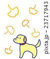 秋 銀杏 いちょうのイラスト 23717943
