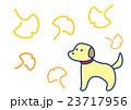 秋 銀杏 いちょうのイラスト 23717956