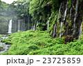 白糸の滝 滝 世界遺産の写真 23725859