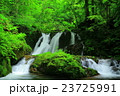 藤沢渓流 渓流 夏の写真 23725991