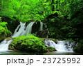 藤沢渓流 渓流 夏の写真 23725992