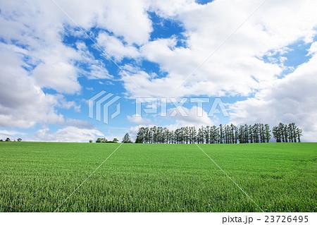 草原 23726495