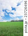 マイルドセブンの丘 丘 畑の写真 23726496