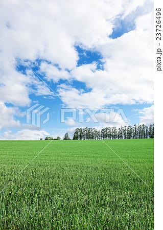 草原 23726496
