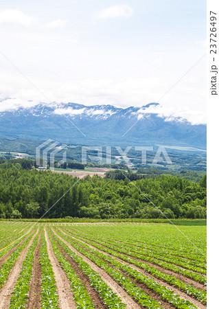 畑と十勝岳 23726497
