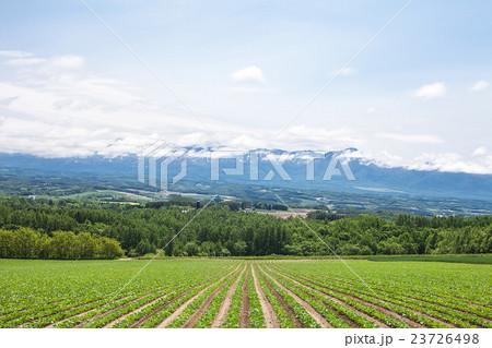 畑と十勝岳 23726498