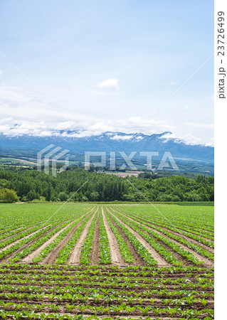 畑と十勝岳 23726499