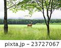 蝦夷鹿 鹿 野生動物の写真 23727067