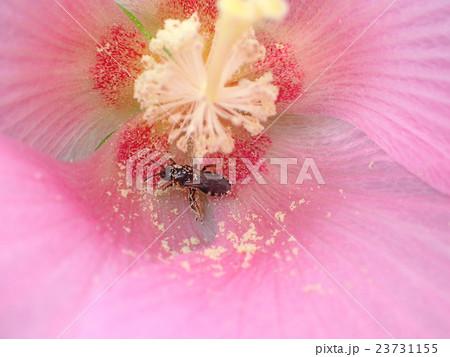 花粉を集める虫 23731155