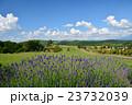 美瑛 北海道 畑の写真 23732039
