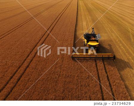 北海道産小麦「ゆめちから」の収穫 23734629
