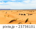 camel caravan going through the desert 23736101