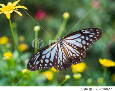 Beautiful butterfly on flower 23740027