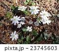 春の野草-1 23745603