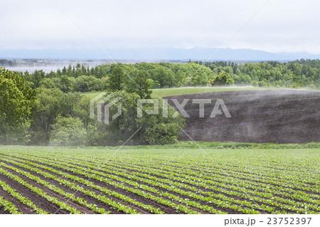 畑の湯気 23752397