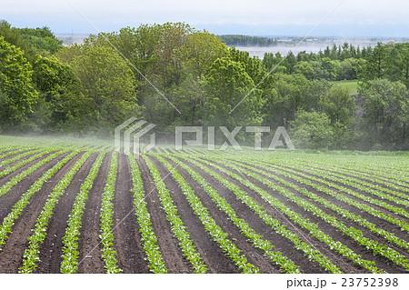 畑の湯気 23752398