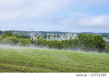 畑の湯気 23752399