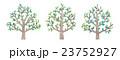 木のイラスト 23752927