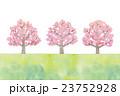 桜の木のイラスト 23752928