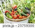 新鮮な野菜 23759300