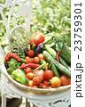 新鮮な野菜 23759301