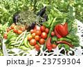 新鮮な野菜 23759304