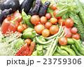 新鮮な野菜 23759306