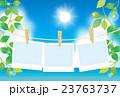 ポラロイドと海と植物 23763737