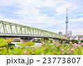 東京スカイツリーと木根川橋 23773807