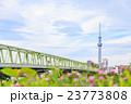 東京スカイツリーと木根川橋 23773808