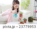 多肉植物を育てる女の子 23779953